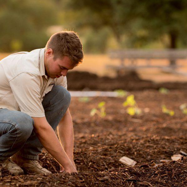 gardening-13